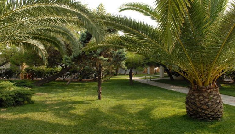 Verde & Mare Bungalows - Κοκκώνι Κορινθίας εικόνα